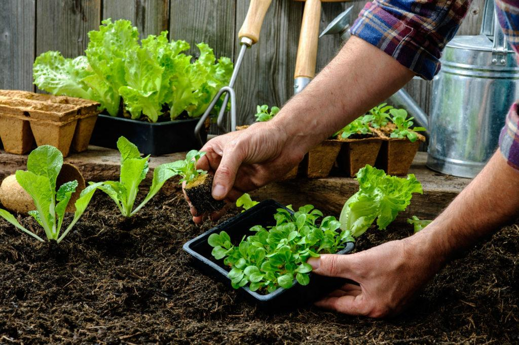 How gardening helps the environment?
