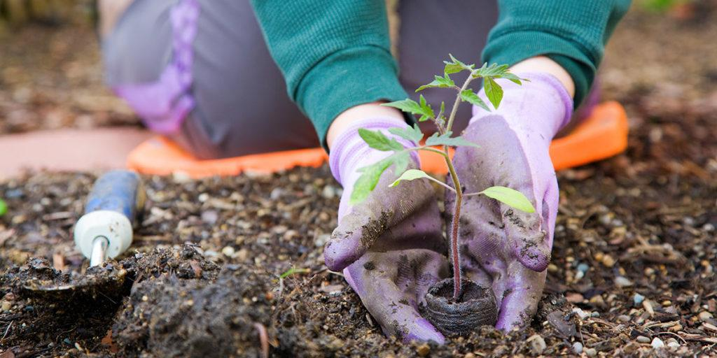 Why gardening is good for mental health?